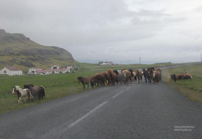 islandia_3-10-2014_east_4