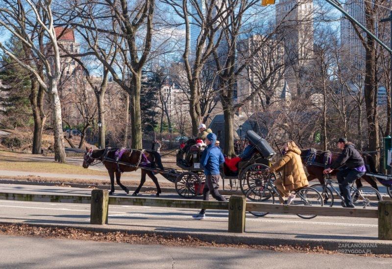 USA – Central Park -1